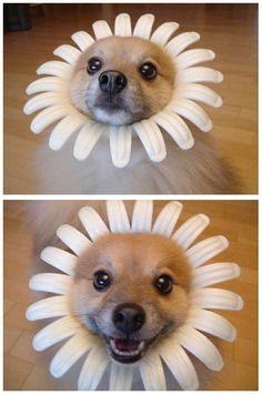 Aquí un perrete feliz. #humor #risa #graciosas #chistosas #divertidas