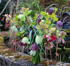 Wild spring bouquet of snakes head fritillary, hellebores and purple Japanese maple from http://www.facebook.com/LockCottageFlowers