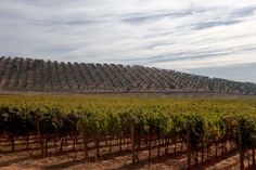 A trip to #Tuscany is not complete without a visit to one of their infamous vineyards.