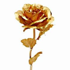 Indian gifts | Gifts and Flowers to India » Flowers » Golden Rose