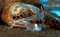 tortuga-diarioecologia