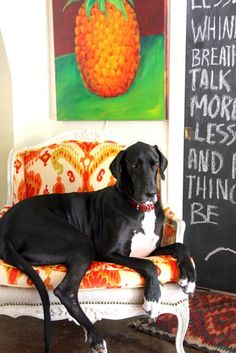 """As seen on Desire to inspire's """"Pets on furniture"""""""