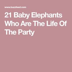 21 Baby Elephants Who Are The Life Of The Party