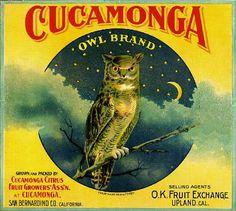 Owl Fruit Crate Label Art Prints