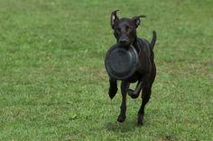 Ok, I'll give the Frisbee..mhmm...