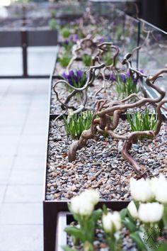 Helsingin keskustassa käydessä silmä osui moniin ihaniin kukkaistutuksiin, mihinkäs muuhunkaan? Näin keväisessä katukuvassa juuri ruu...