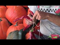Tons of peppers and you doing know what to do with them?   Sichler Farms: How To Make A Chile Ristra - YouTube