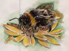 colour study of bee by moonshot69
