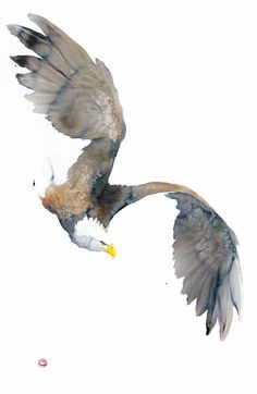 Bald Eagle - Karl paint his birds from memory, using watercolor and charcoal on hand-made paper.  - I look at a bird and a specific expression or posture, which particularly expresses the personality of the bird, sticks in my mind. Then I paint...
