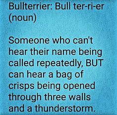 Definition Of Bull Terrier