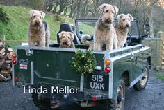 Terriers and Land Rovers 1