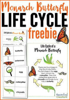 Monarch butterfly life cycle - free printables. Set includes vocabulary words, sequencing cards, and a poster from Homeschool Creations.