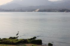 lone crane on Miyajima, Japan.