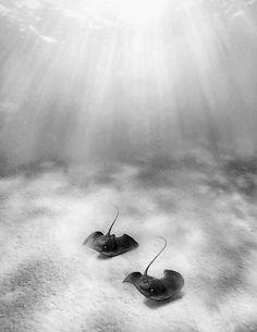 black & white ray