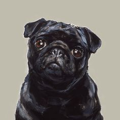 Black Pug Art  print  signed  Ltd Ed Collectable by paintmydog, £47.00