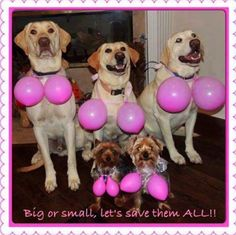 """October is Breast Cancer Awareness Month. image """"Breast cancer is the second… Breast Cancer Quotes, Breast Cancer Survivor, Breast Cancer Awareness, Breast Cancer Party, Surgery Humor, Beat Cancer, Lung Cancer, Breast Cancer Support, Ideas"""