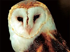 owl totem spirit animal ..... This is the result I got the second time I took the test.