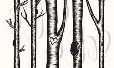 ********INSTANT DOWNLOAD ********    You will receive:  5 Birch Tree Clip Art high quality 300 DPI 12 x 12 (3600 x 3600) PNG transparent background