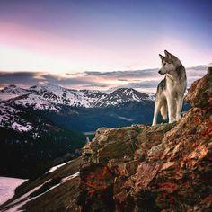Mies vie koiransa uskomattomille seikkauluille, sillä hän ei halua pitää sitä lukittuna sisällä | Vivas