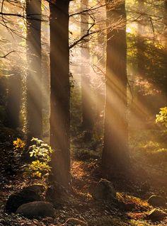 ☀Woodland Light by Gary McParland