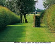 Beautifully-clipped topiary contrasts with the Miscanthus hedges to either side - Piet Blanckaert, Landscape Architect