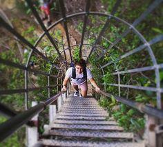 #tbt Blue Mountains  #throwback #climbing #ladder #hiking #nature #national #park #canyon #green #trees #bush #wilderness #katoomba #blue #mountains #backpacking #australia #travel #traveler #adventurer #fernweh #wanderlust #explore #explorer by malowni