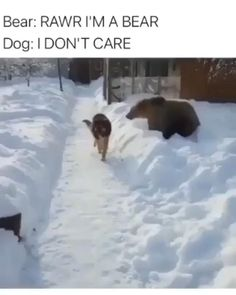 Funny Animal Jokes, Funny Animal Pictures, Animal Memes, Funny Dogs, Cute Dogs, Funny Snow Pictures, Funny Bears, Daily Pictures, Super Cute Animals