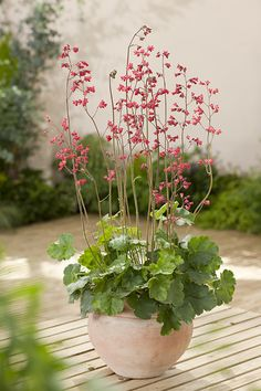 Outdoor Trees, Plantation, Green, Flowers, Plants, Google, Gardens, Potager Garden, Plant