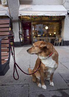 Pääseekö koira ravintolaan? Vuoden alusta lähtien on lemmikin voinut viedä ravintolaan, jos omistaja sen sallii. Koiran porttikielto ravintoloihin näyttää kuitenkin istuvan tiukassa. Dogs, Animals, Egg, Animales, Animaux, Doggies, Animais, Dog, Animal