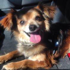 <p>Before I adopted Roscoe, I didn't think I could adopt an older dog. As attached as I am to Hunter, I didn't think I could adopt a dog that I might not have for as long. But that all changed when tiny Roscoe walked through my door. Adopting Roscoe after fostering …</p>