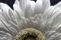 fleur   Flickr - Photo Sharing!