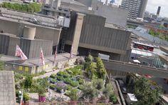 Queen Elizabeth Hall rooftop garden London