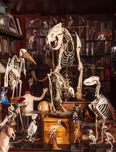 The Viktor Wynd Museum of Curiosities, Art & Natural History - London #skeletons