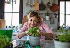 Basilic en pot : 9 astuces efficaces pour ne pas le faire mourir et le conserver longtemps - Biba Magazine Biba Magazine, Potted Plants, Watermelon, Pots, Home And Garden, Fruit, Ethnic Recipes, Gardening, Photography