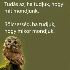Bölcsesség Affirmation Quotes, English Quotes, Picture Quotes, Affirmations, Life Quotes, Owl, Inspirational Quotes, Wisdom, Words