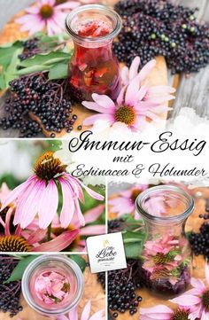 Immune vinegar: strengthen your health with Echinacea & Elderberry! Aloe Vera Creme, Herbal Tea Benefits, Diy Projects For Beginners, Real Plants, Tea Blends, Healing Herbs, Natural Healing, Tea Recipes, Amor