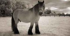 Top 10 Most Insanely Beautiful Horses in the World