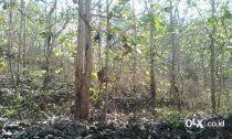 Tanah kebun datar sudah isi pohon jati berumur 5 - 7 tahun pinggir jalan aspal. jumlah pohon 1000 lebih. dengan luas 1 hektar 10000m2  harga 17jt/are harga masih bisa nego sudah sertifikat hak milik akses jalan 5 meter  lokasi desa medewi pekutatan jembrana bali  2 km dari jalan raya denpasar - gilimanuk ke utara  keterangan lebih lanjut hub  082138890888 087862472789