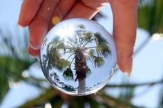 Caught in a Bubble - Palm Tree