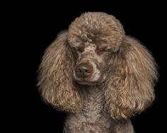 Zen Dogs: Photographer Captures The 'Relaxed' State Of Man's Best Friend | Bored Panda