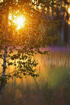 Voice of Nature: Photo Scenery Photography, Landscape Photography, Sunrise Photography, Good Day Sunshine, Sunset Photos, Landscape Photos, Sky Landscape, Beautiful Moments, Amazing Nature