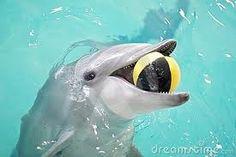 dolfijn die speelt met water
