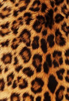 Le pelage des animaux que c'est beau !