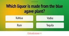 Which liquor is made from the blue agave plant? #Trivia #Quiz
