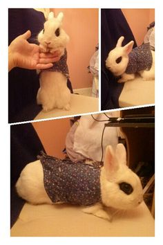 NEW! Bunny coats! Handmade by Megan C. Gates. A great way to keep your furry friend safe, warm, and fashionable!