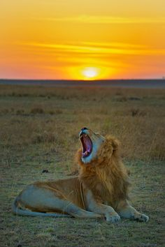 Before I die, I want to go to the African Safari and see real live lions, elephants and giraffs in their natural habitat.