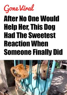 What an amazing story! http://iheartdogs.com/after-no-one-would-help-her-this-dog-had-the-sweetest-reaction-when-someone-finally-did/: