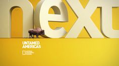Nat Geo Channel / New Visual Identity Proposal by Juan Bautista Fittipaldi , via Behance