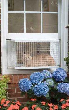 The Cat Veranda.