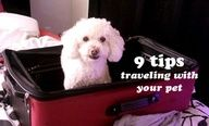 Great tips for traveling with your fur babies!